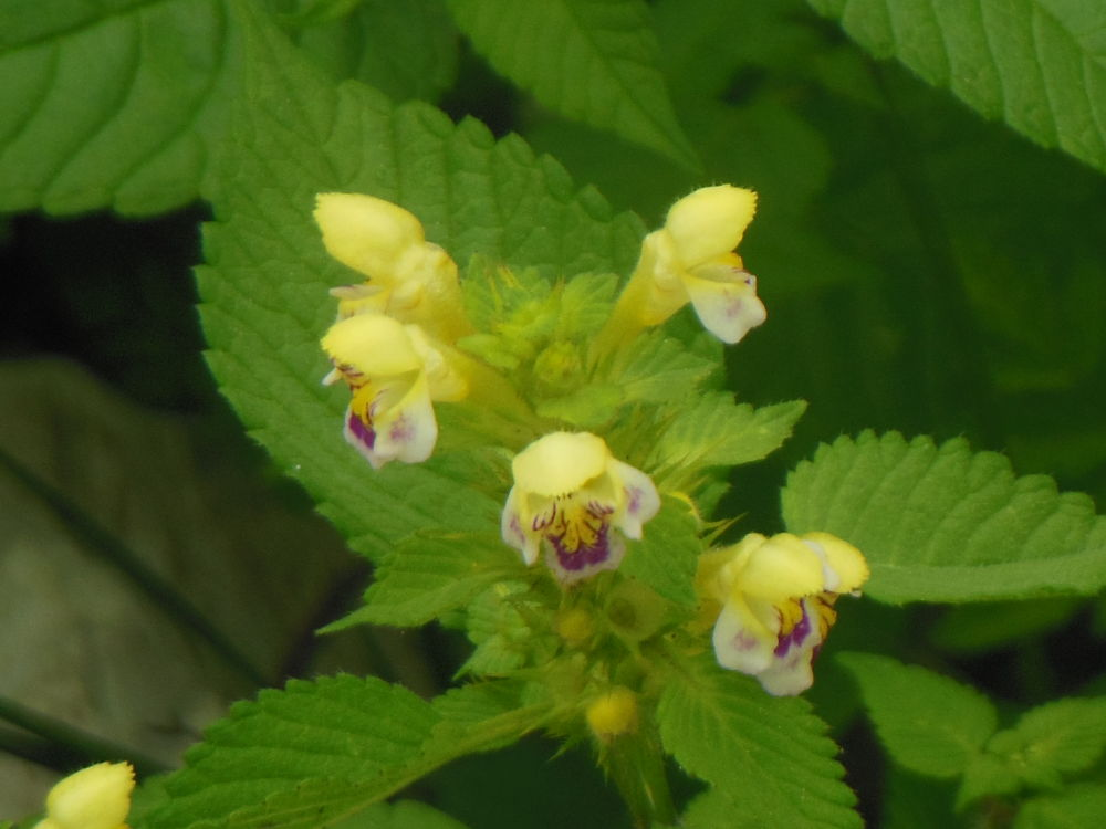 Flower by fede