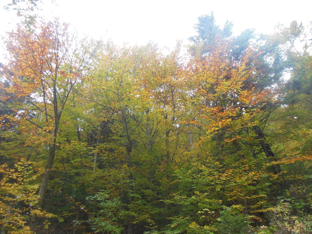 Prime foglie colorate by fede