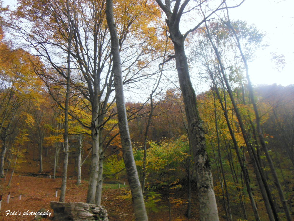 Autunno by fede