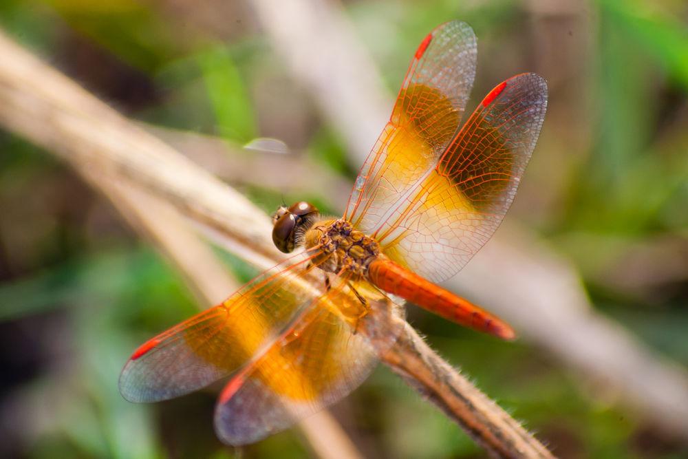 Photo in Macro #dragonfly #colour #macro #tele #70-300 #canon