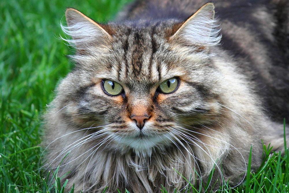 CAT by fabioaverna9