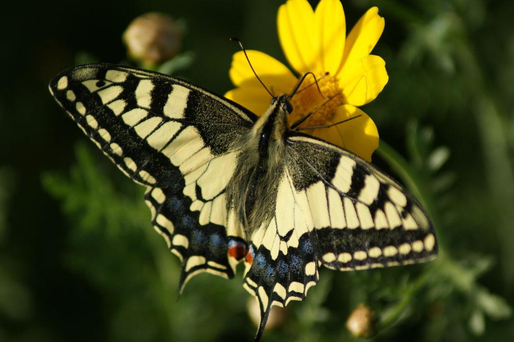 Butterfly by Yehuda Yahav