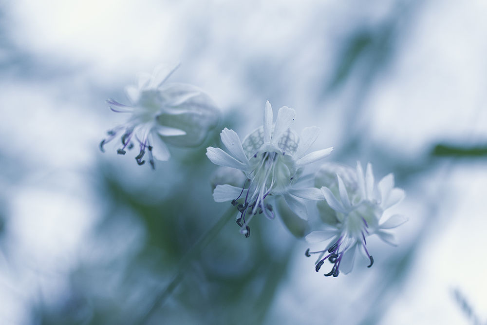 Photo in Macro #summer #flower. #white #field flower