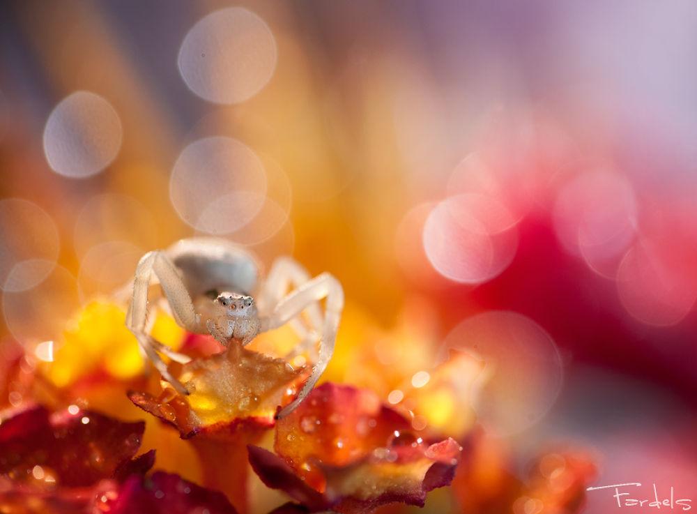 Autumn Magic !! by Jorge Fardels