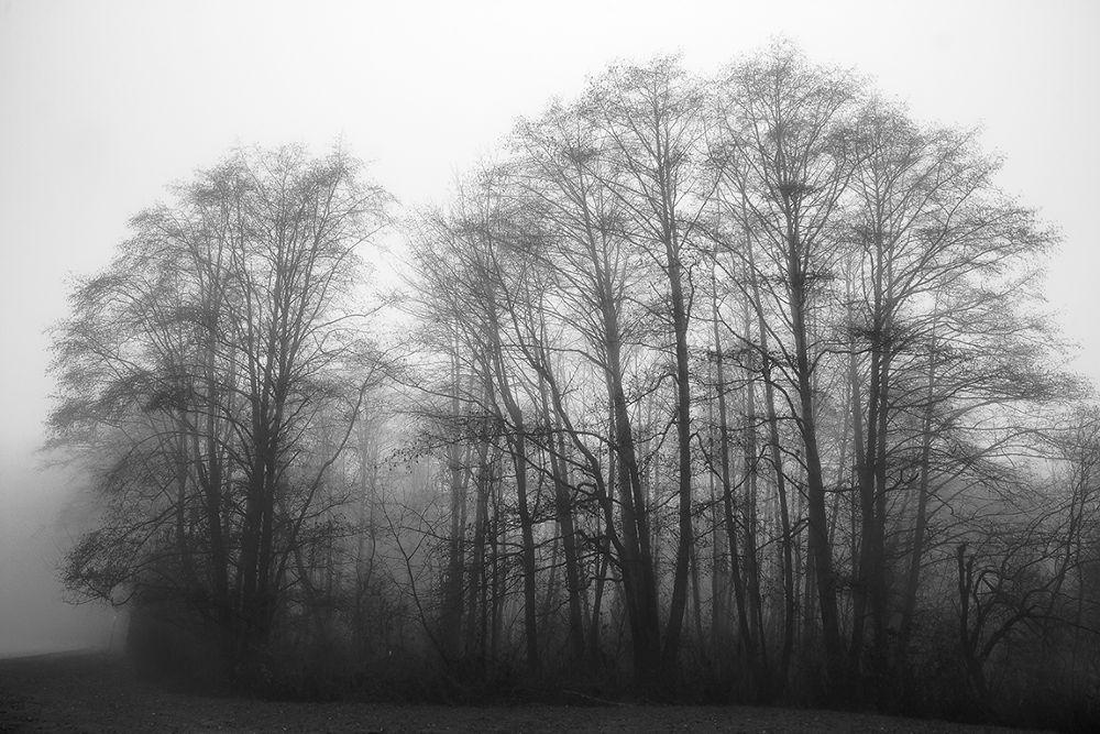 Shades of Grey by bunlee