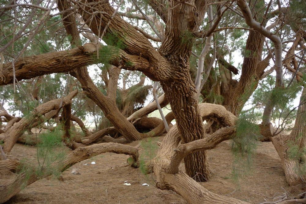 Photo in Random #tree #ypa2013