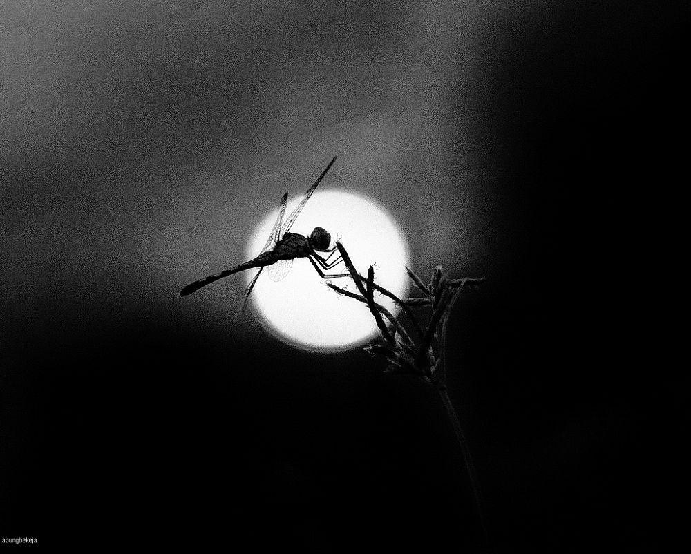 alone  by Muhammad Kuddus