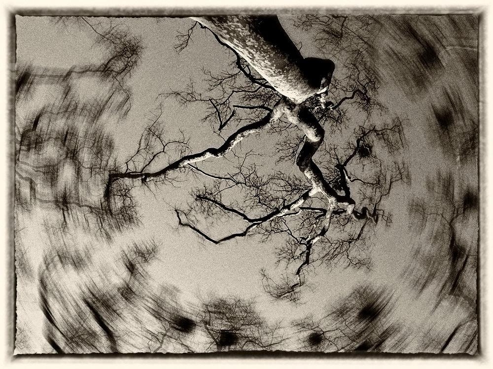 O'Tree by Hossein Zakeri