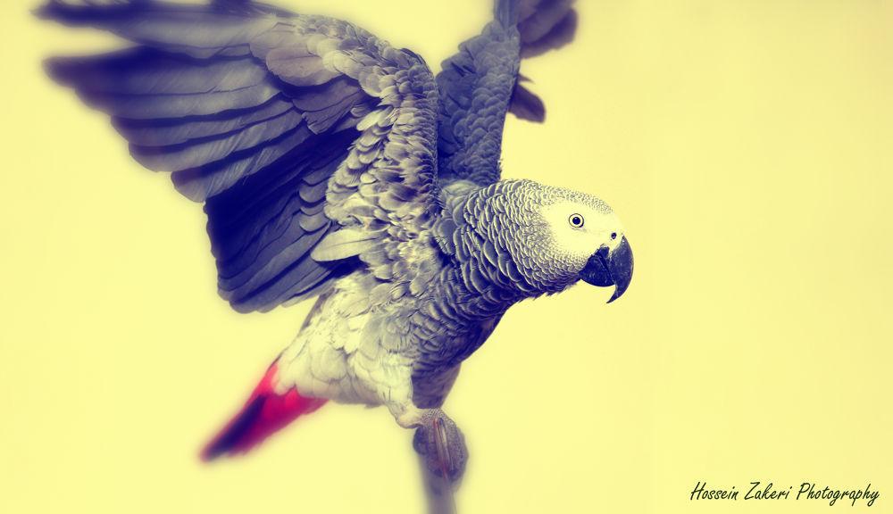 The Bird  by Hossein Zakeri