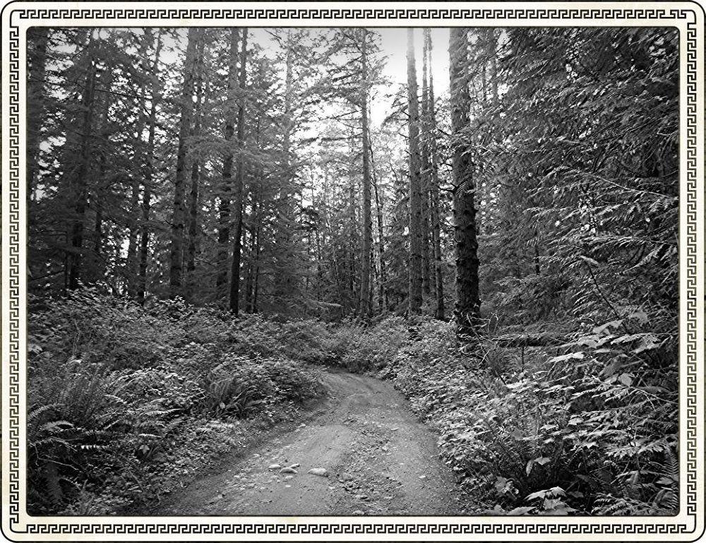 Egdehill Woods 3 by blairehobbs