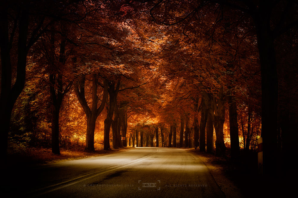 golden road by CMD-Photography