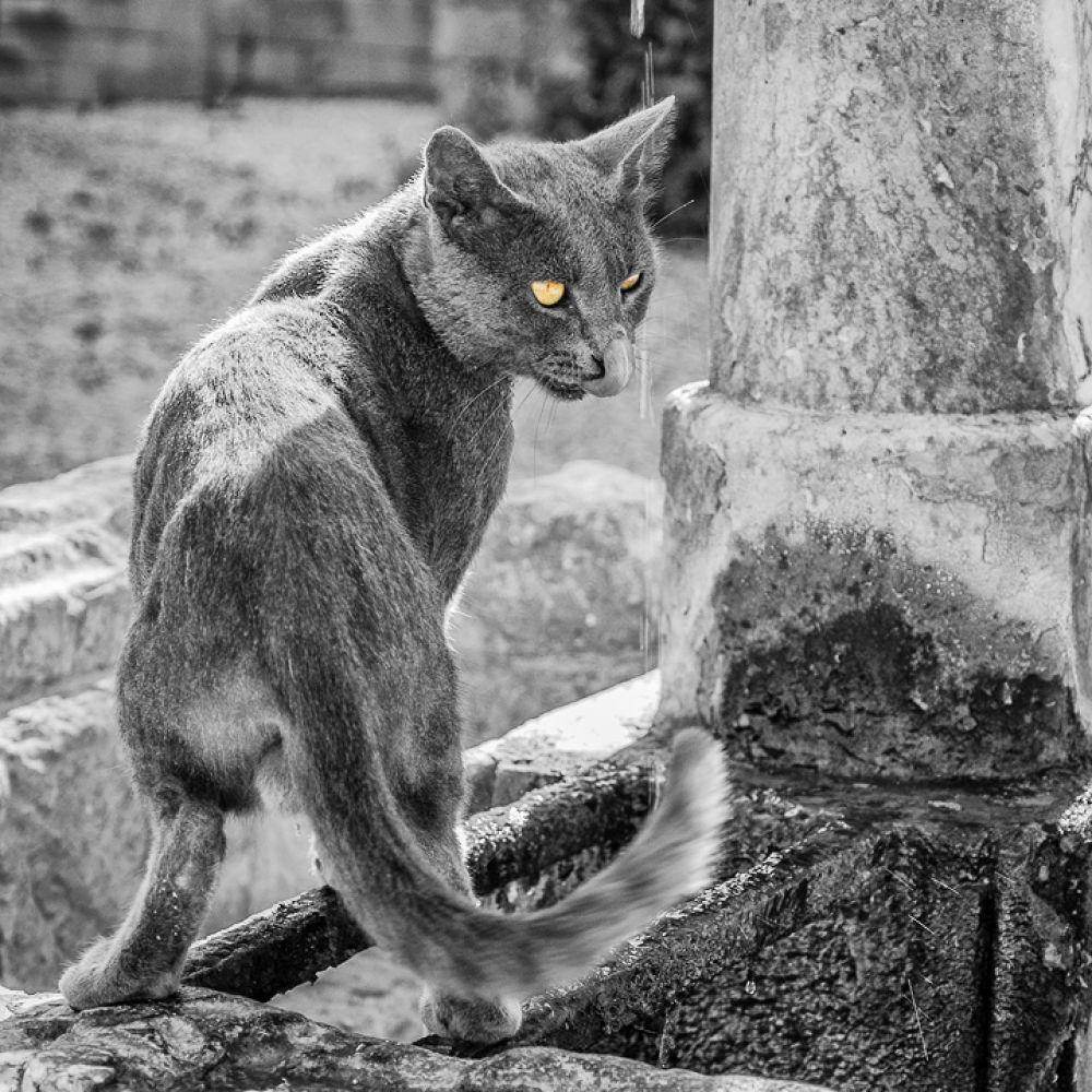 Cat by Jaromir Grich