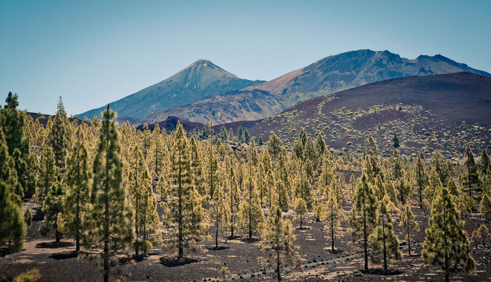Teide National Park by Andi969