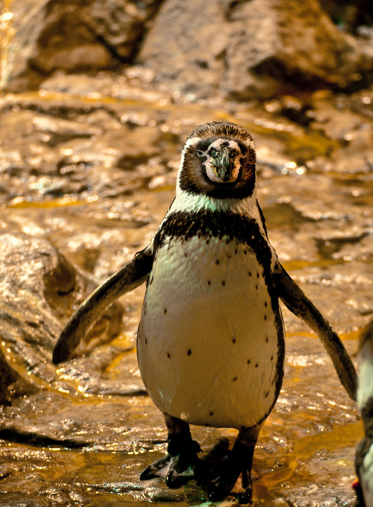 Dance, little penguin, dance... by Andi969