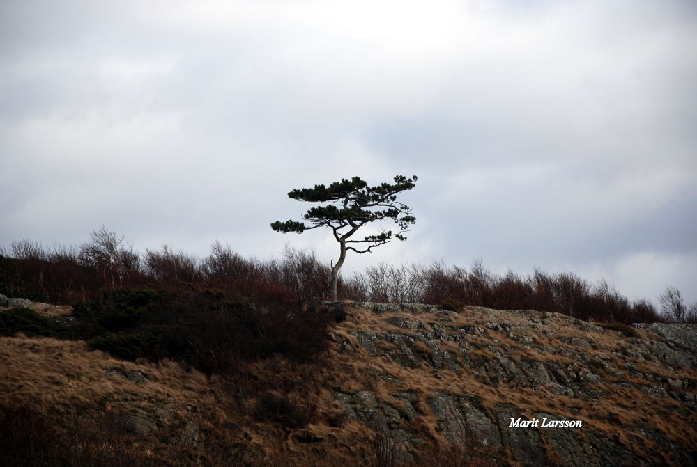 Lonely by maritlarsson5