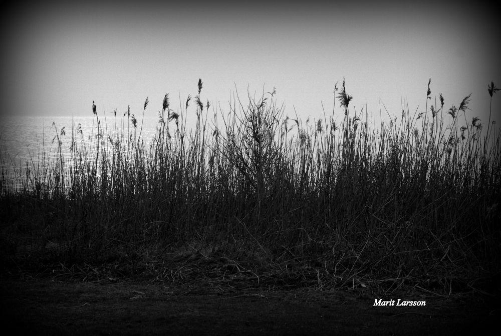Natur by maritlarsson5