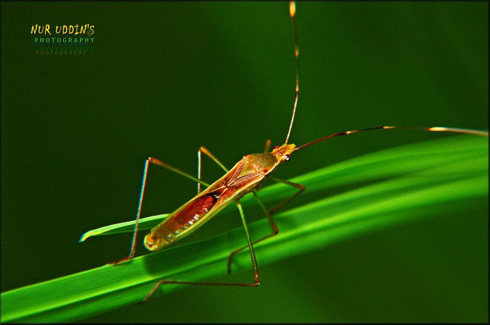 Gandhi (Local insect).. by nuruddin562