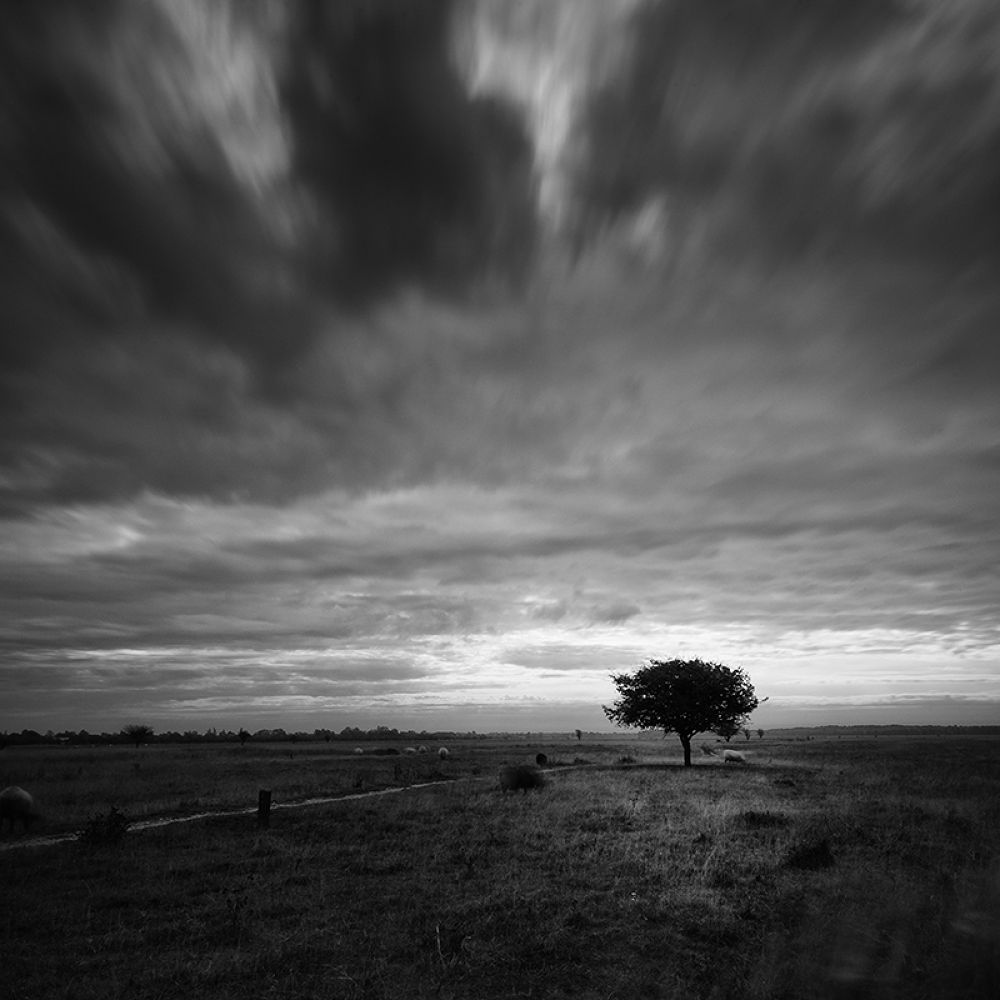 Amager,Denmark  by Frodi Brinks