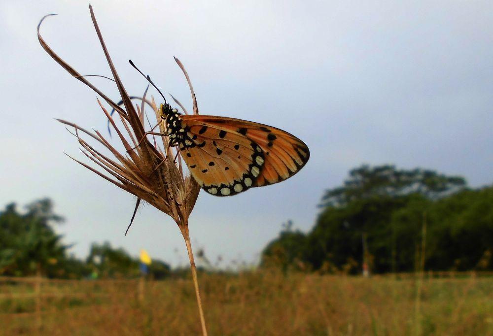 no nectar here by Mulyatna Pakde