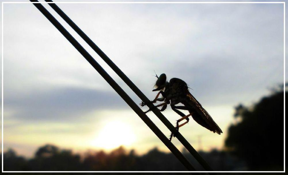 DOUBLE DIAGONAL LINES & ROBBERFLY SILHOUETTE by Mulyatna Pakde