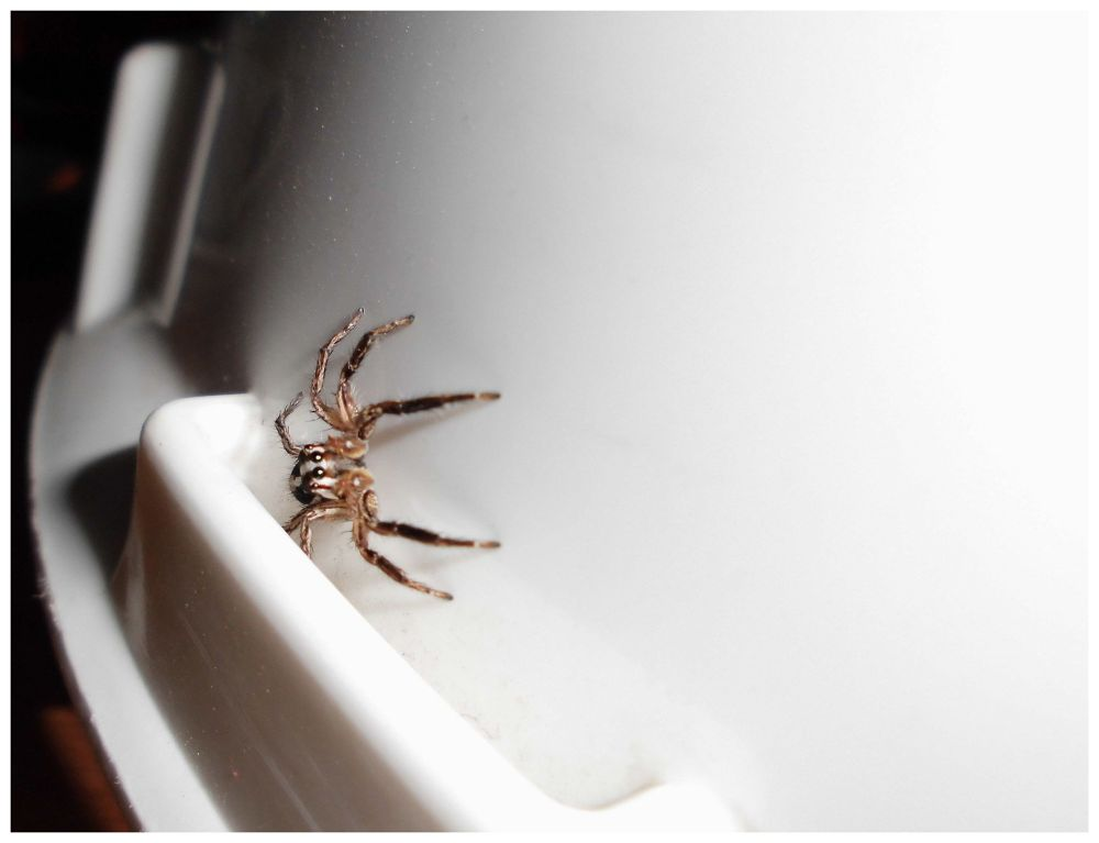 JUMPER SPIDER ON HELMET by Mulyatna Pakde