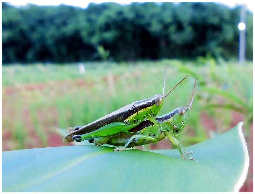 NATURE MOMENT, ENJOY EACH OTHER by Mulyatna Pakde