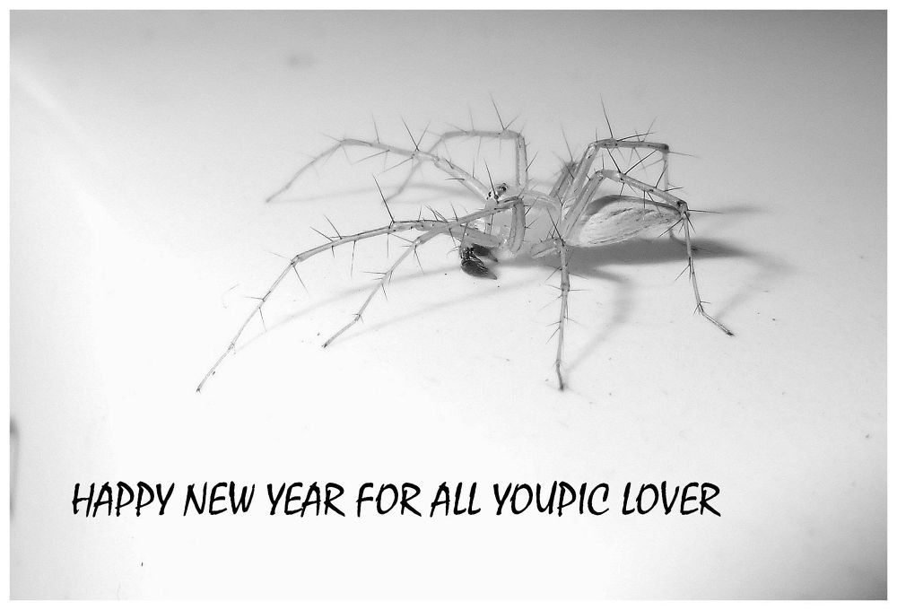 NEW YEAR SPIDER IN B&W by Mulyatna Pakde