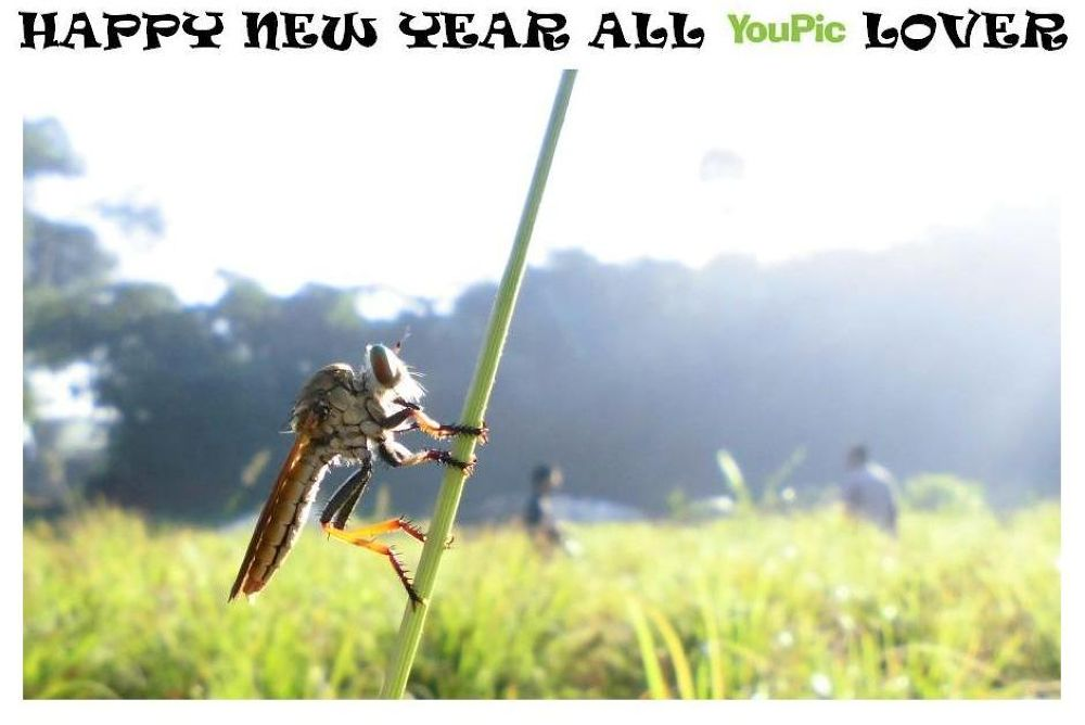THE HUNTERS SAY HAPPY NEW YEAR by Mulyatna Pakde