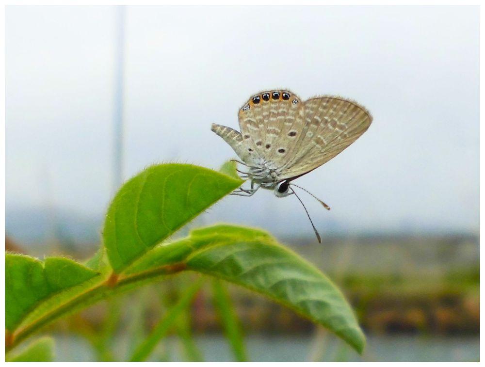 LITTLE BUTTERFLY by Mulyatna Pakde
