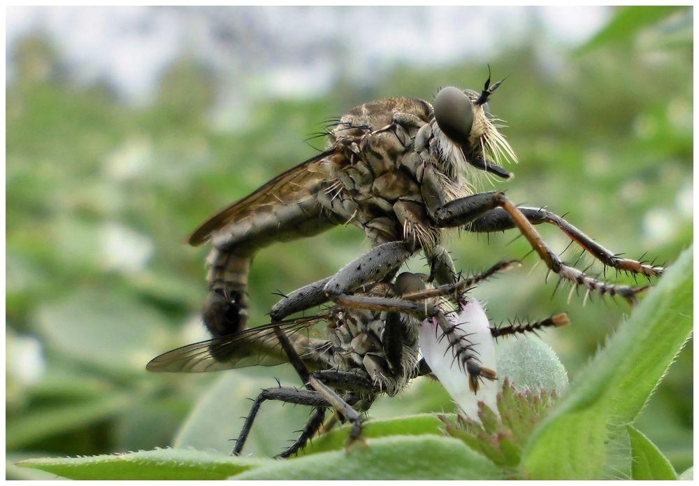 mating at noon by Mulyatna Pakde