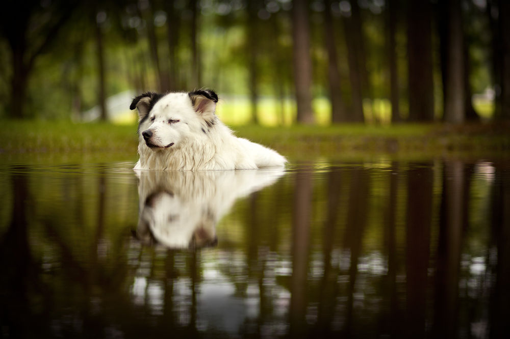 Photo in Animal #dog #relaxing #water #puddle #bliss #enjoyment #pet #animal #canine #outdoors #nature