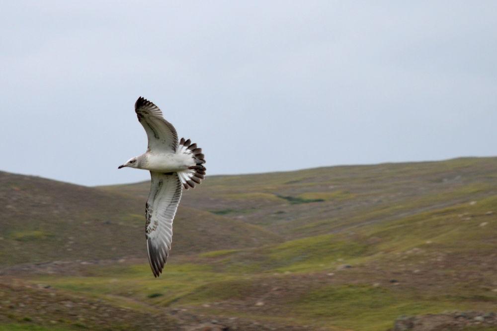 flying by CaZym VaZyr