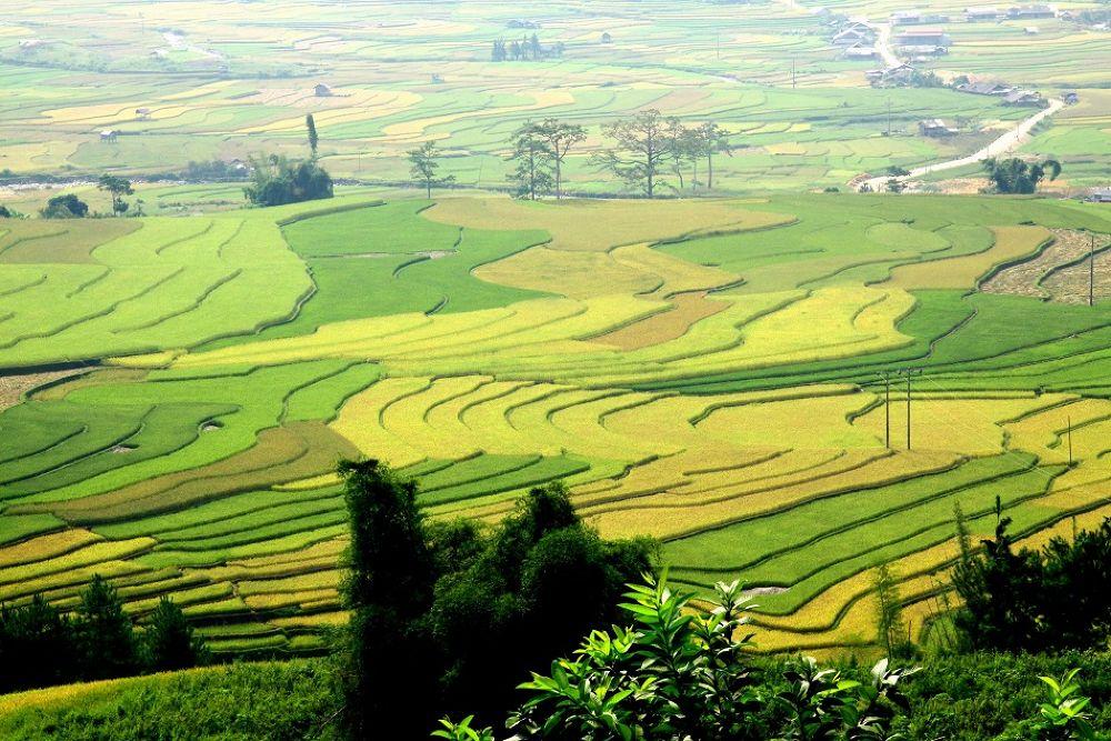 Colours my hometown (at Mu Cang Chai) by chinhdohoang