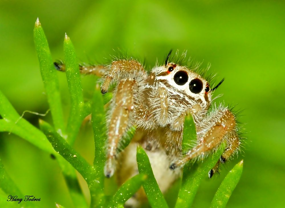 Jumper by Hany Todros