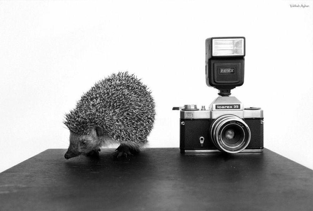 hedgehog by vahhabayhan