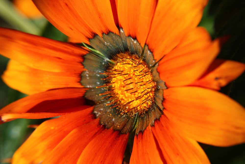 Bronze Flower by tylerstevenson1023