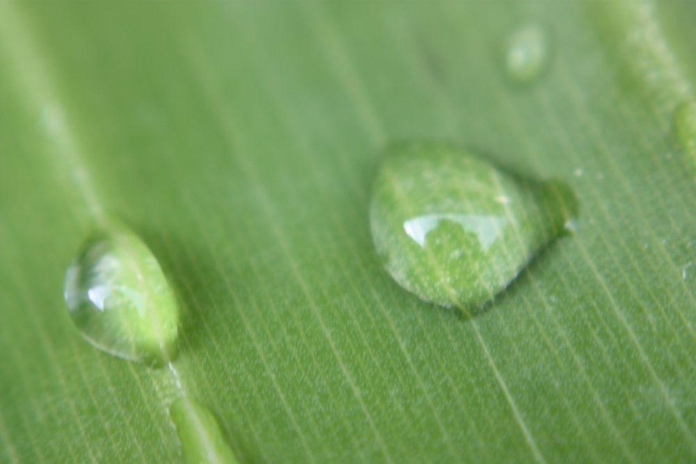 Rain drop on leaf by tylerstevenson1023