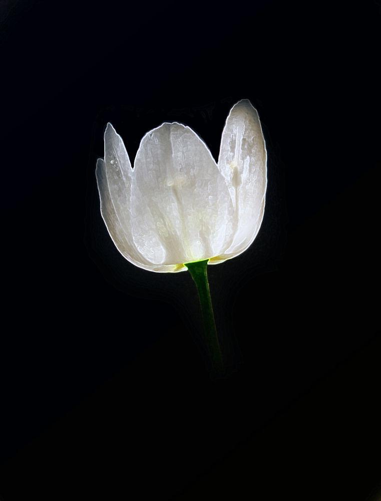 Fiore by linocannizzaro711