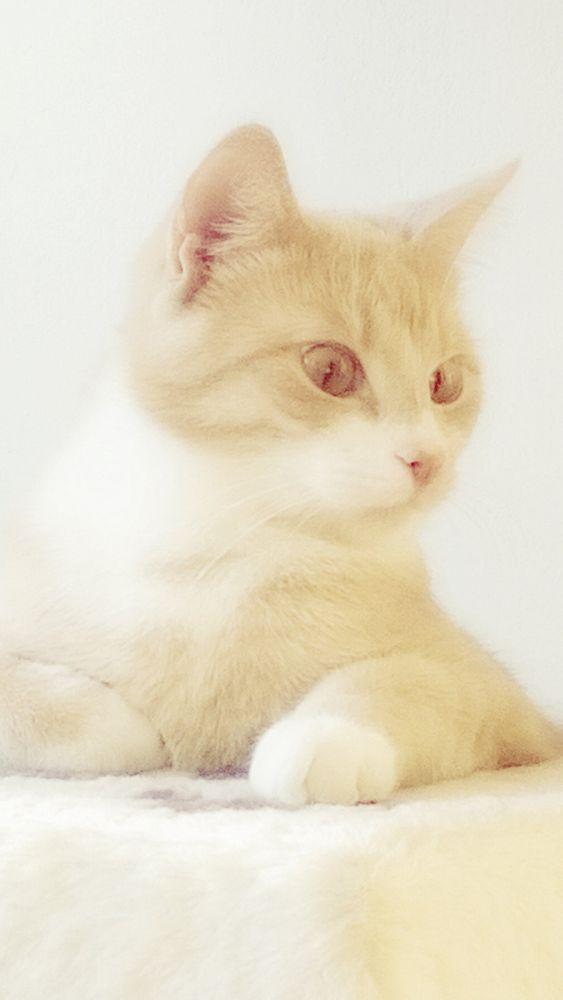 Ginger cat by Farzaneh Ha