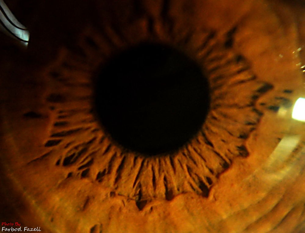 the eye by Farbod Fazeli