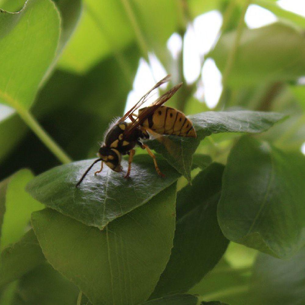 My Bee by omurcanyerli