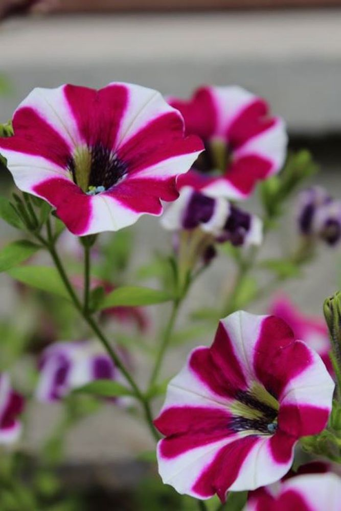 Red and white flowers.. by omurcanyerli