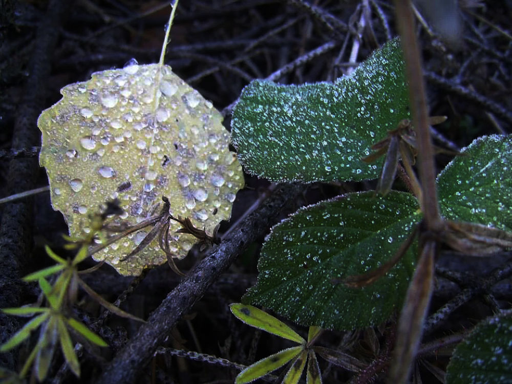 Drops on the leafs by omurcanyerli