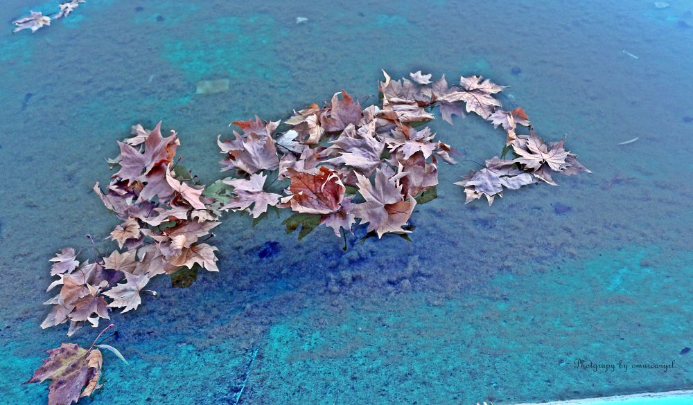 Leafs are swiming.. by omurcanyerli