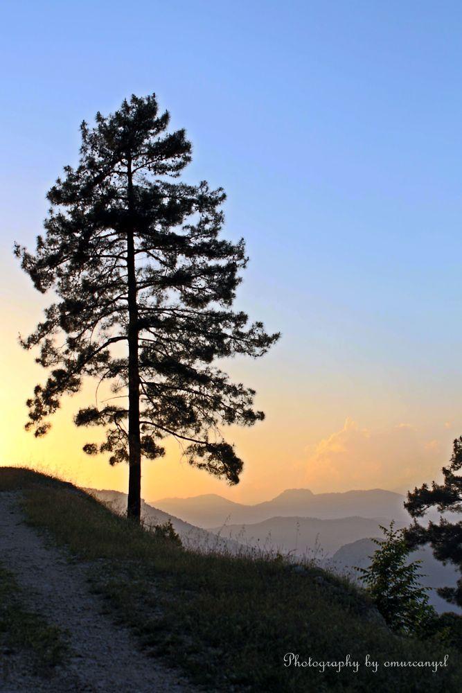 Tree by omurcanyerli
