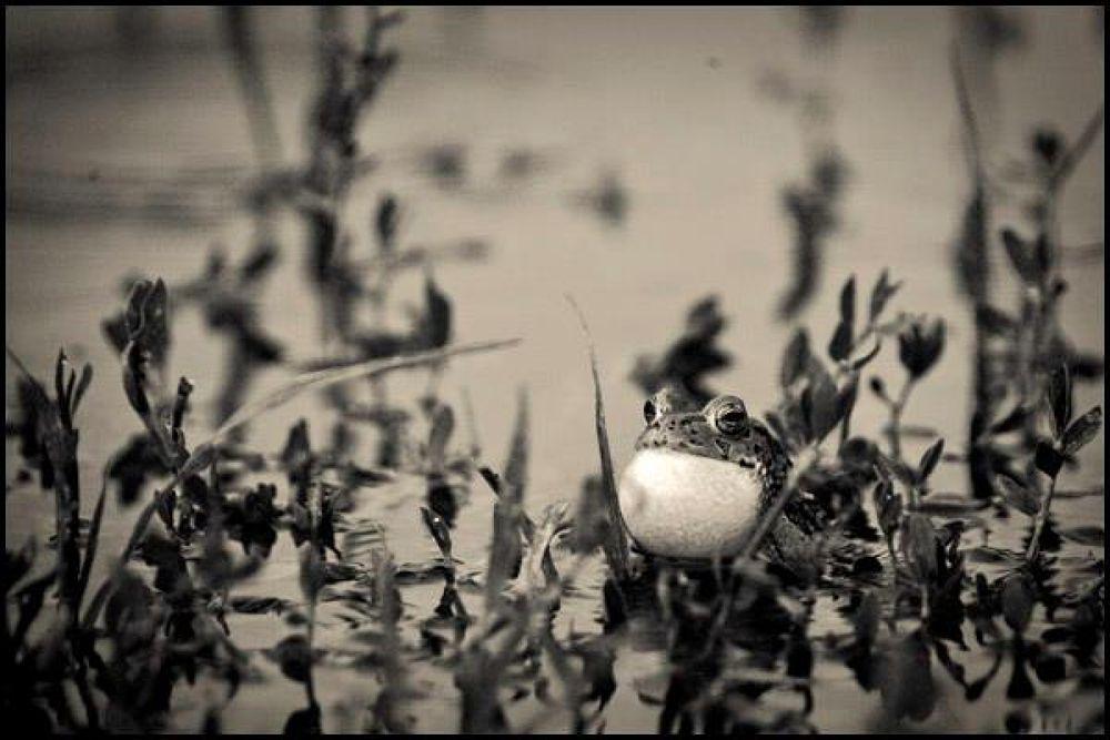 Untitled by Borna Ahadi