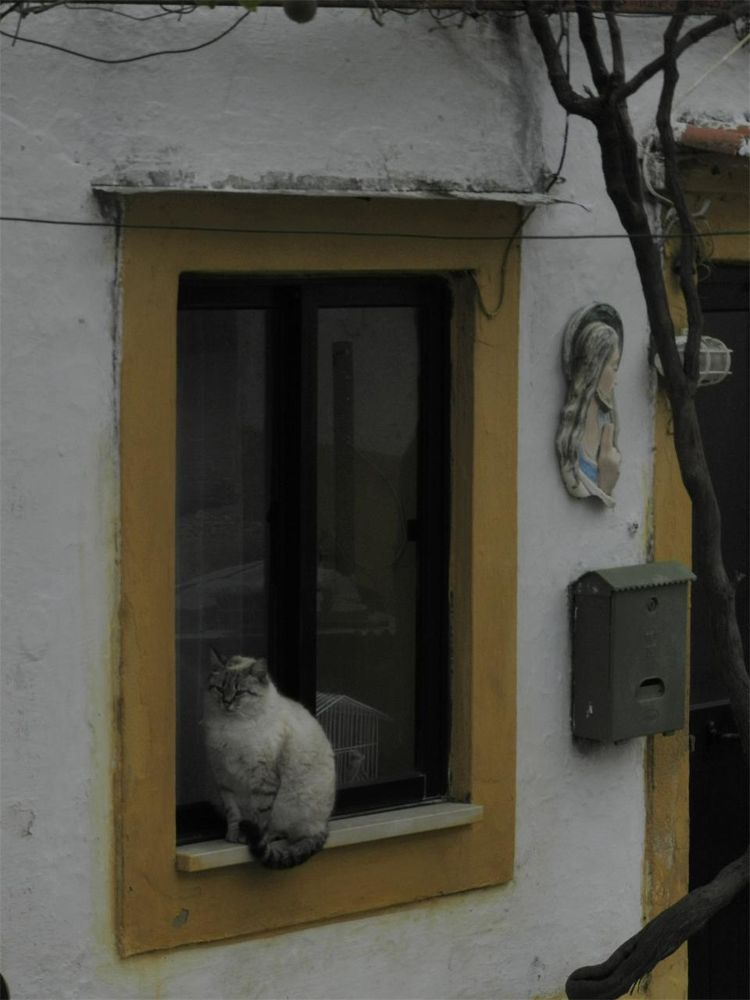 A cat on the window by paulo antunes
