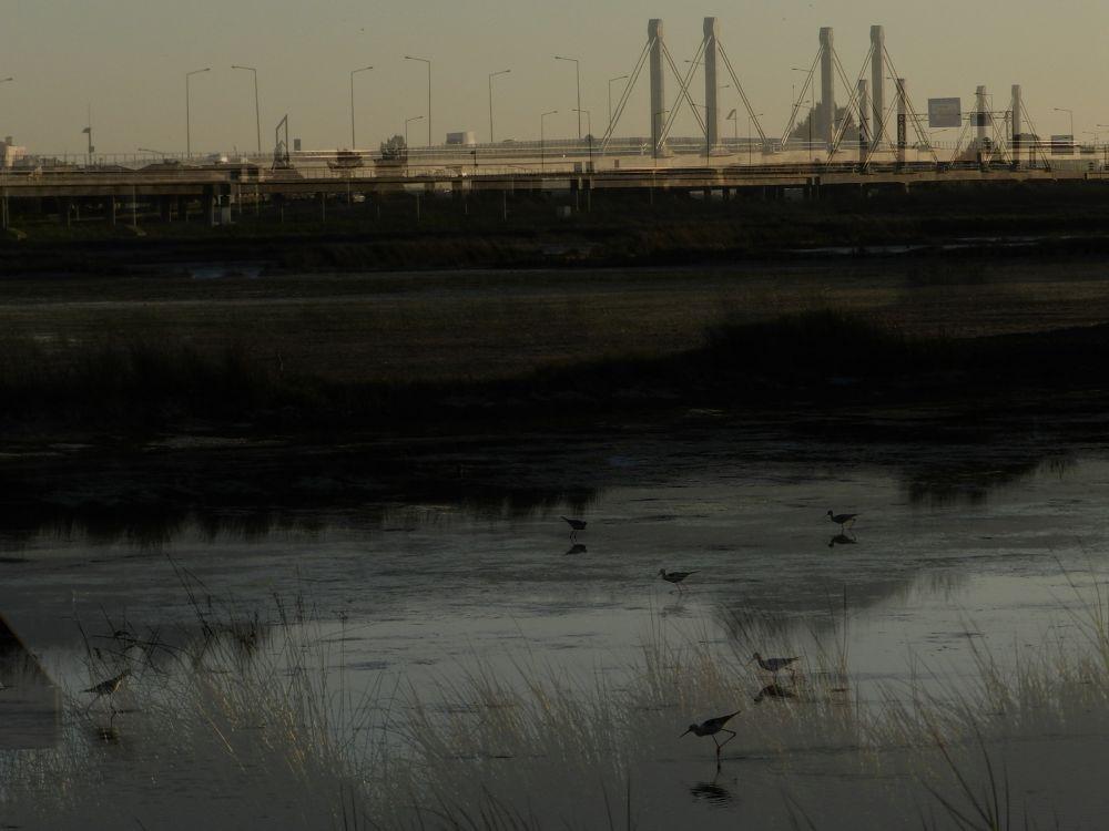 Ria de Aveiro ao anoitecer by paulo antunes