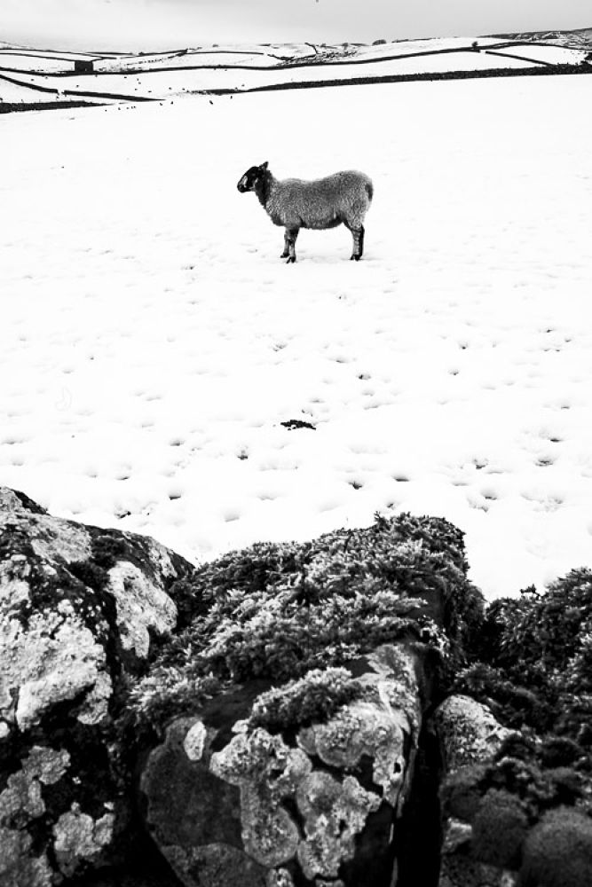 Horton in the Snow (30 of 36) by RNorburyUK