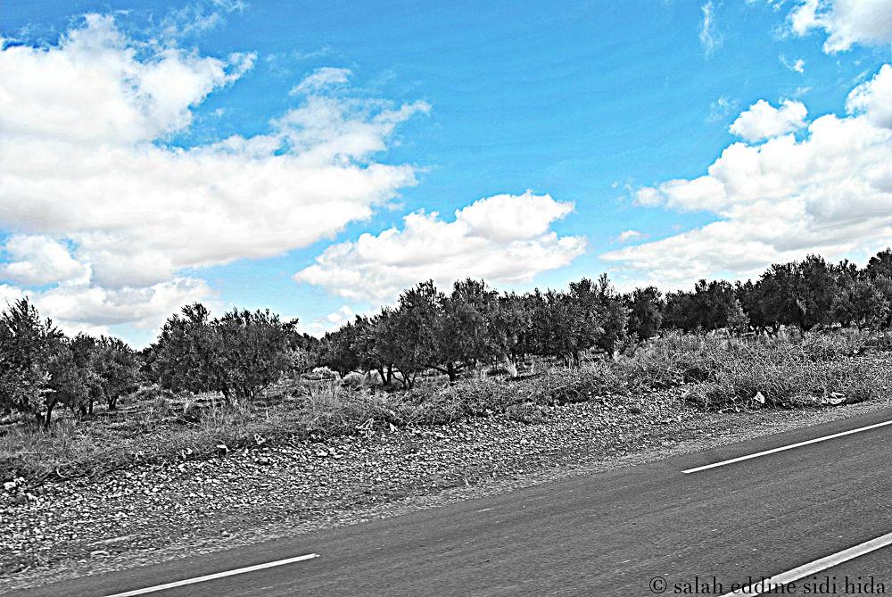 panorama 2 by salaheddinesidihida